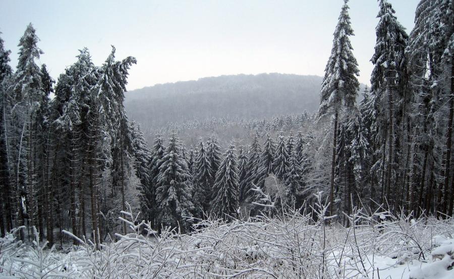 Teutoburger Wald bei Bielefeld