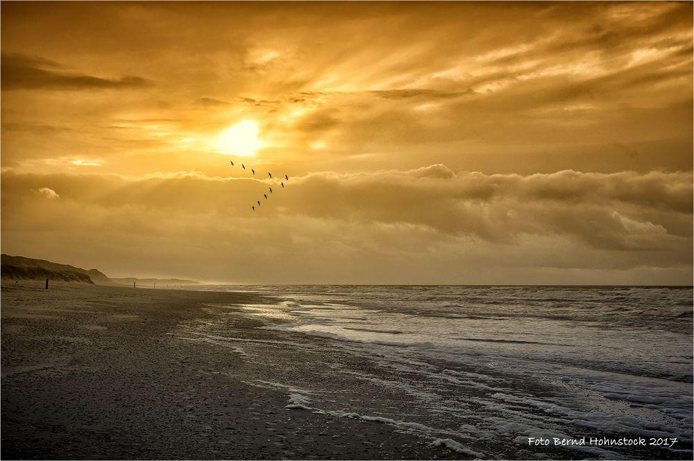 Texels Küste und Wildgänse ...