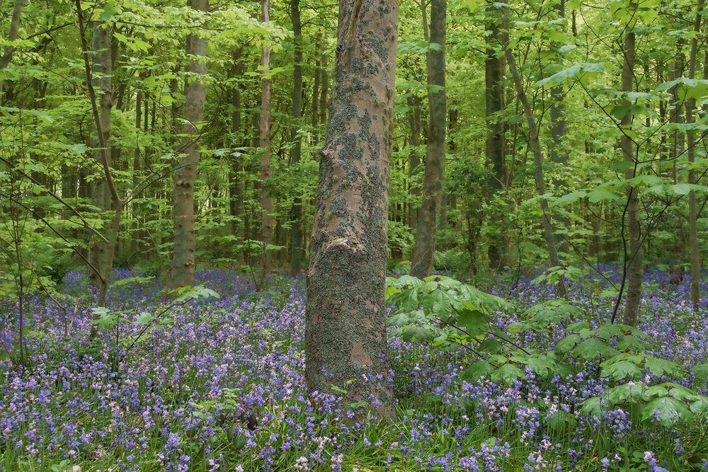 Texelwald im Frühling