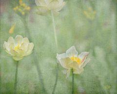Texturas en las flores