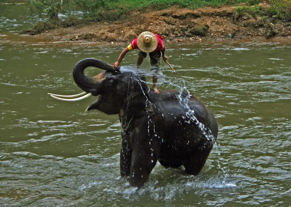 Thailand, Elefantenwaschanlage