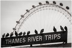[thames river trips]