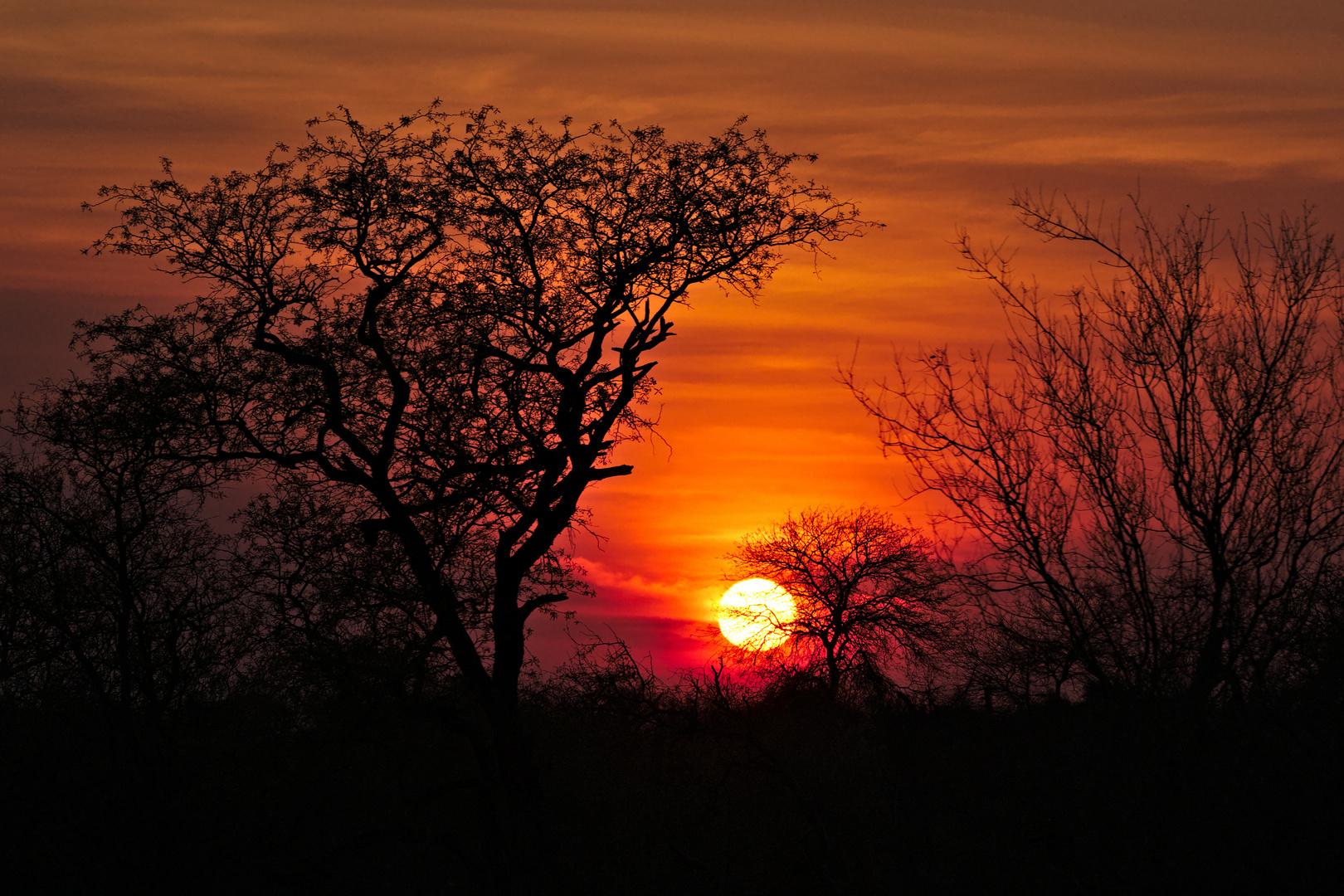 The african sun