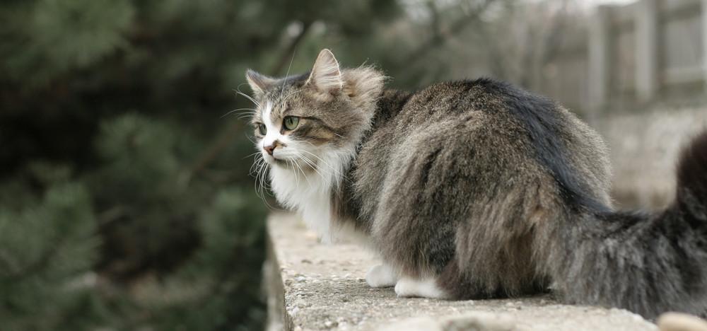 The amazing cat :)