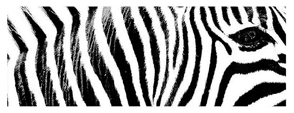 the animal stripes back