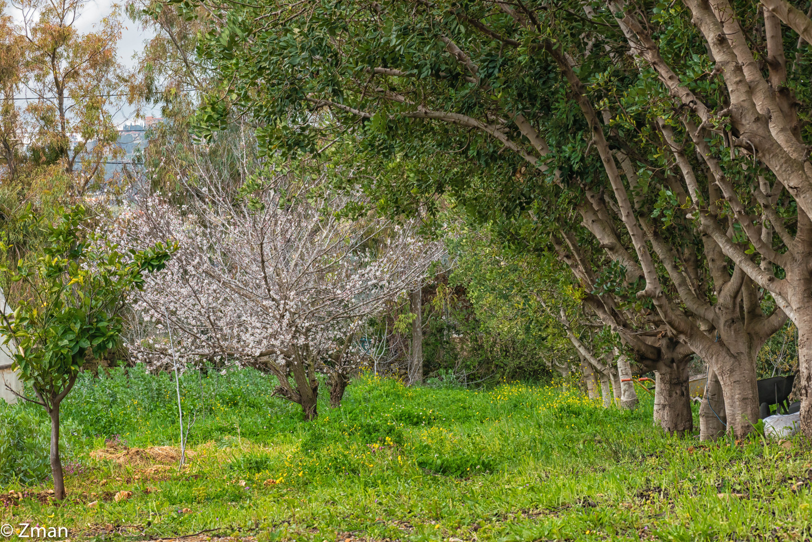 The Apricot Tree SPO_5423-30