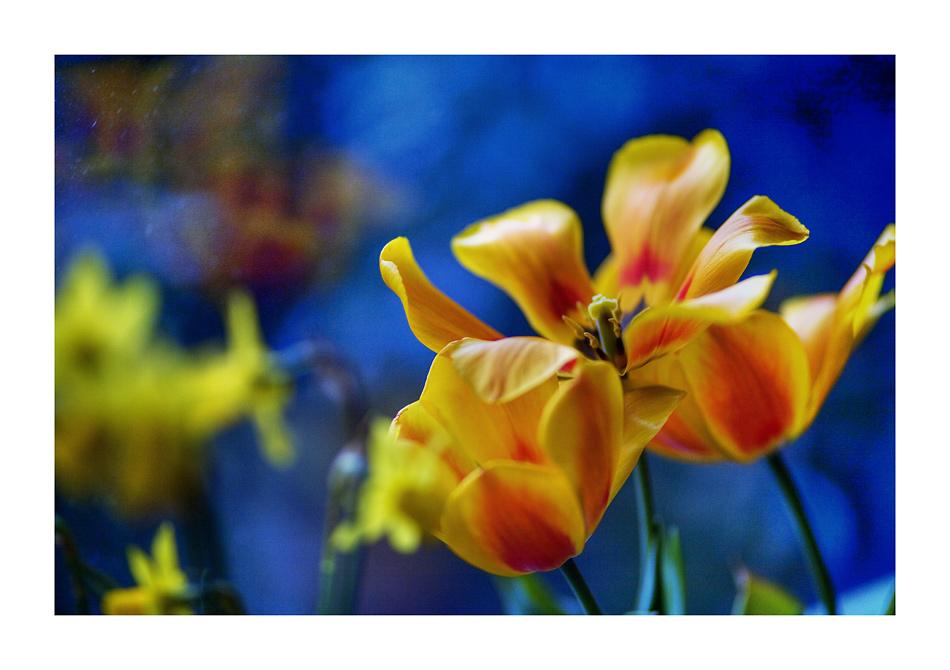 the art of tulip