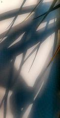 the art of 'zen' shadows