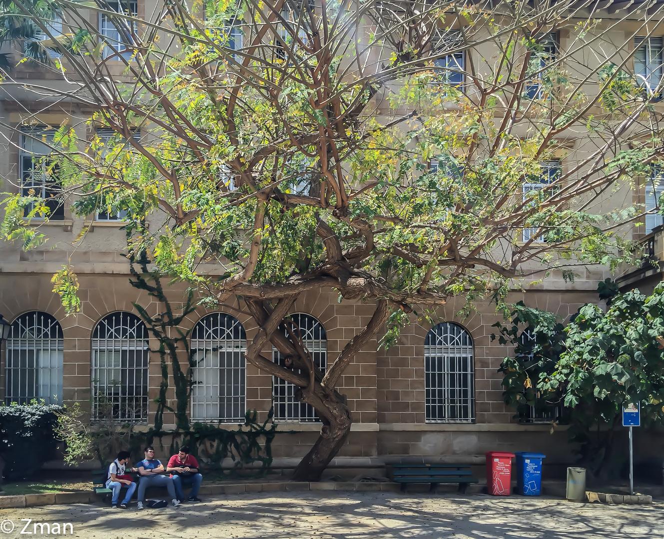 The A.U.B. Campus