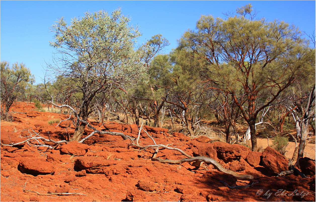 ** The Banks of the Gascoyne River **