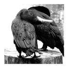 the beak²