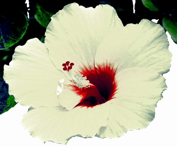 The beauty of a simply white bloom