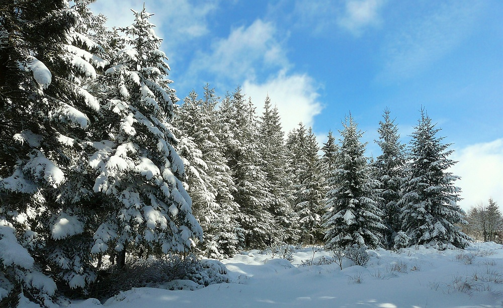 The Beauty of Snow (2)