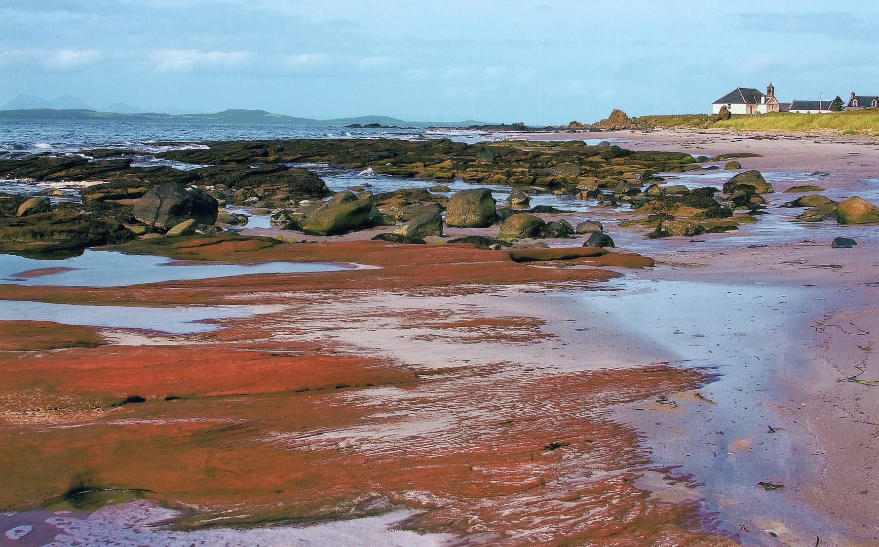 """The Beech at Cleit Kintyre"""