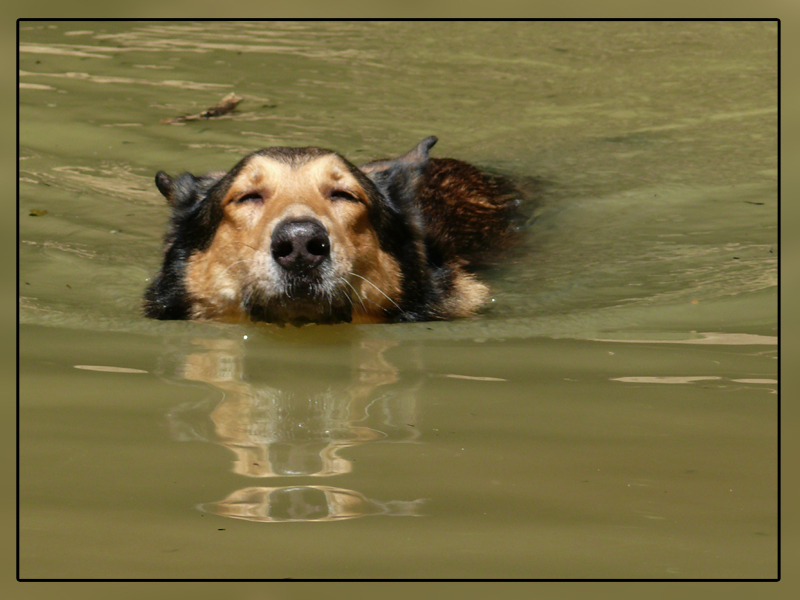 The best swimming dog3!