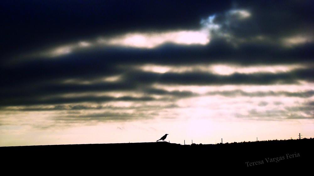 The Bird-67