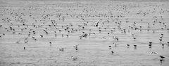 ...The Birds...