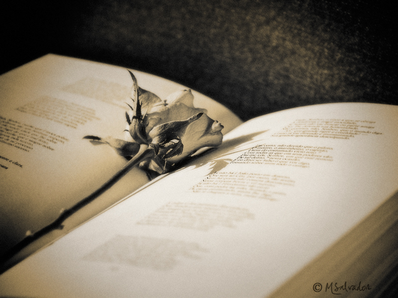 The book and the rose