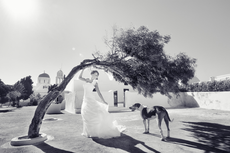 The bride & the dog...