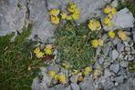 The Burren III