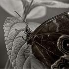 The Butterfly Effect III