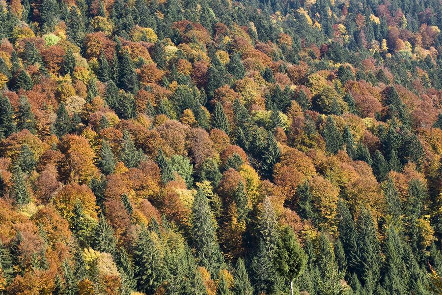 The Carpathians Montains in autumn