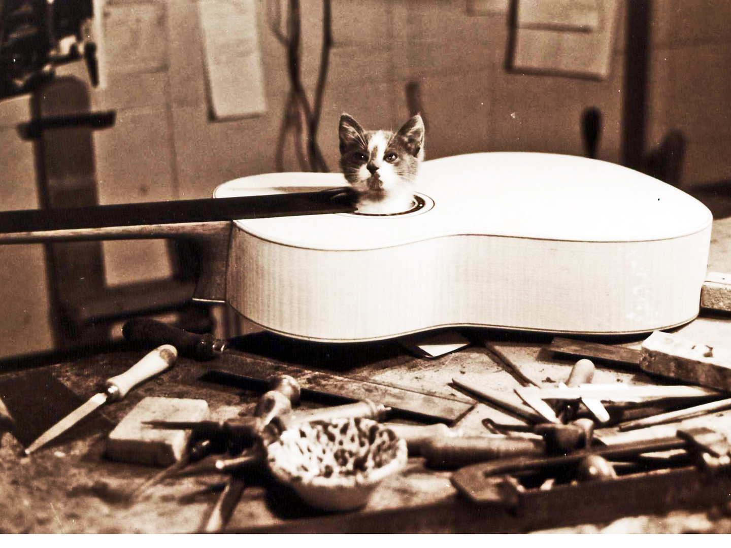 The cat in my guitar