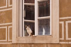 The cat in the window...
