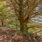 The Cedars of Al Barook-22