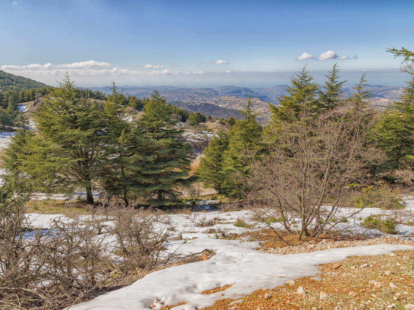 The Cedars of Al Barook-24