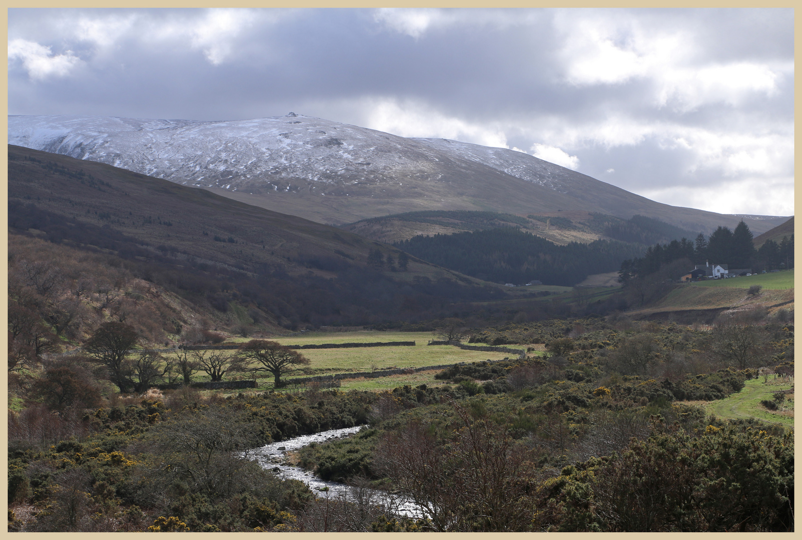 the Cheviot from the College valley 2