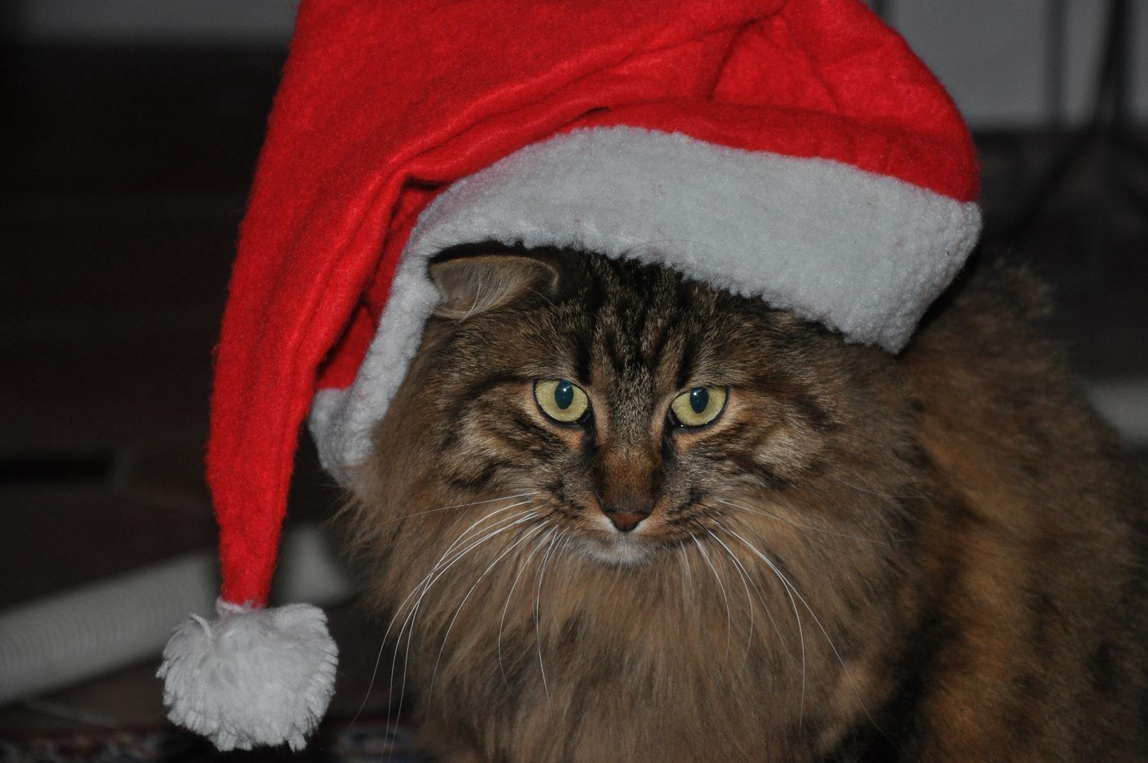 the Chrismas-Cat!!