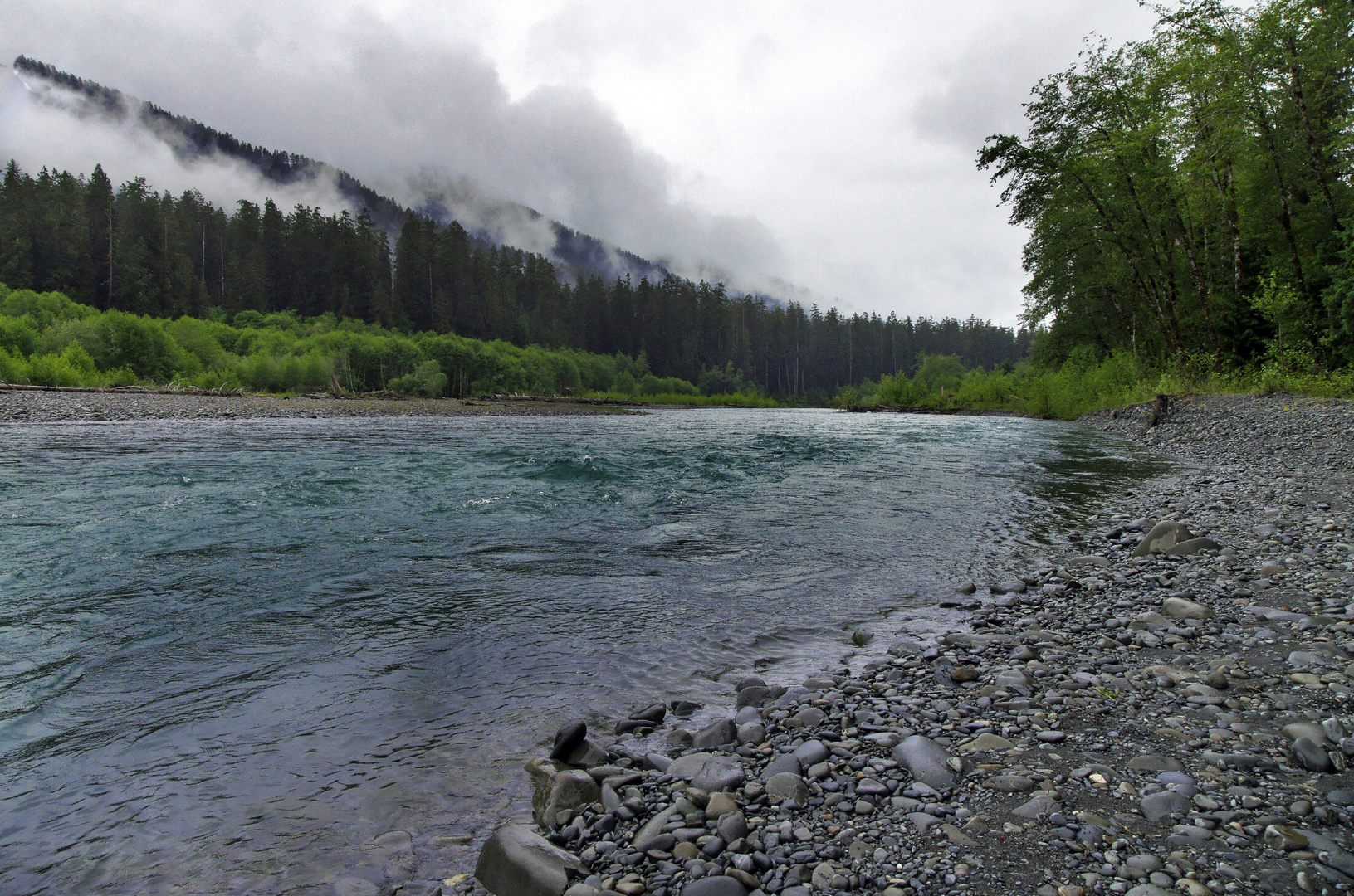 The cold glacier water of the Ho River  (Olympic National Park)