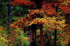 The Colors of Autumn !!!