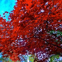 THE COLOURS OF AUTUMN 2013