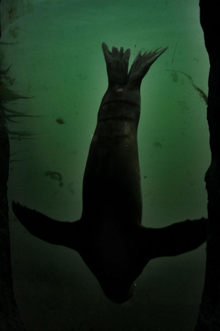 The Common Seal VI