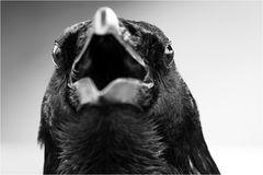 ~ the crow ~