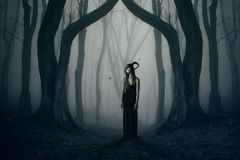 The dark elb