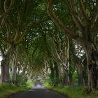 The Dark Hedges - Antrim - Northern Ireland