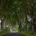 The Dark Hedges - Antrim - Northern Ireland