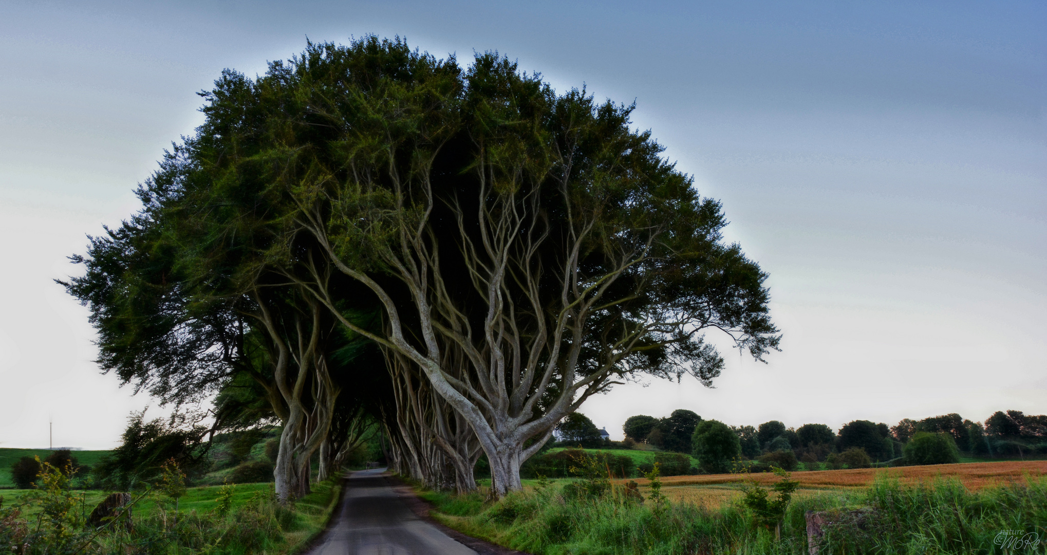 The Dark Hedges (morgens) ...