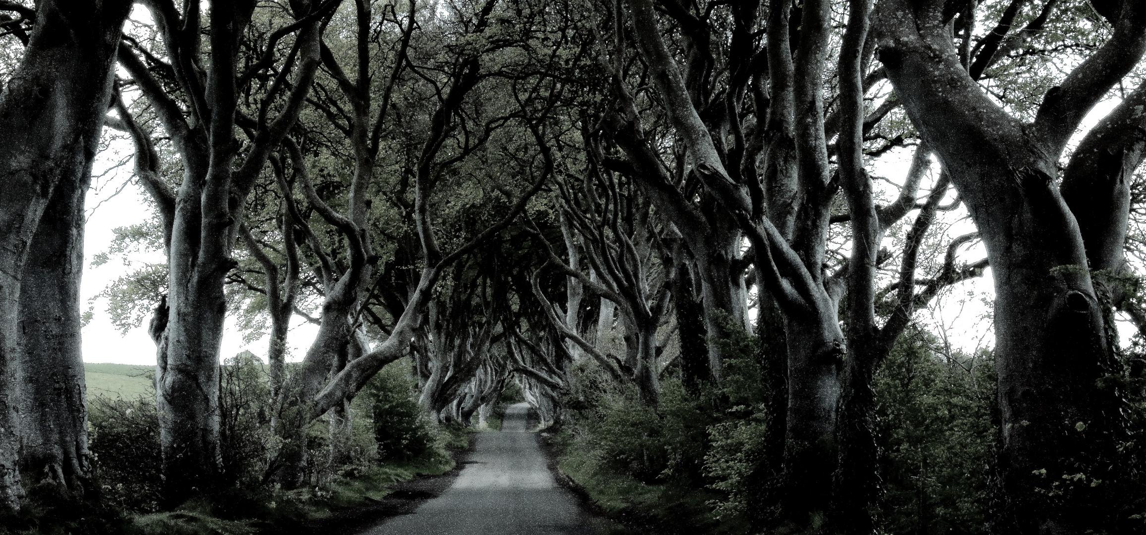 The Dark Hedges - Nordirland