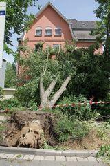 the day after - 1 Tag nach dem heftigen Gewitter an Pfingsten #3