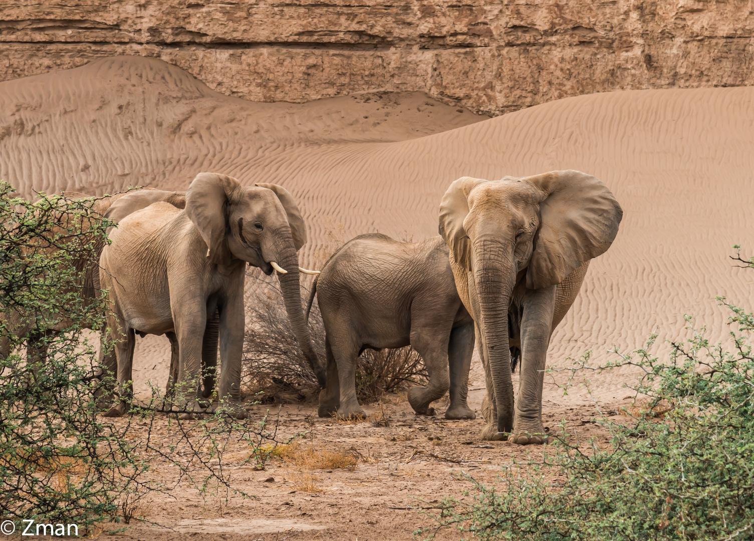 The Desert Elephant 01