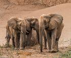 The Desert Elephant 02