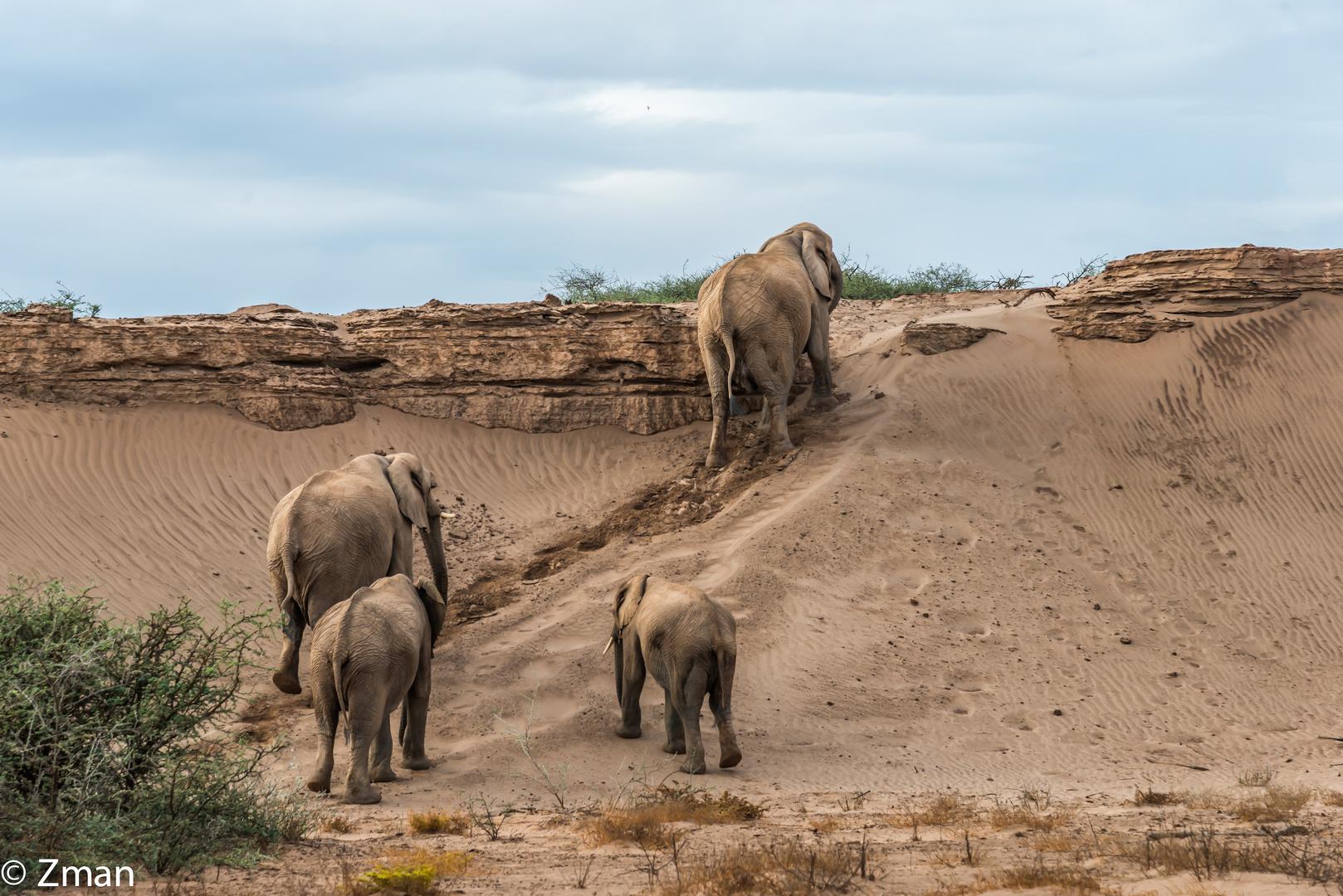 The Desert Elephant 03