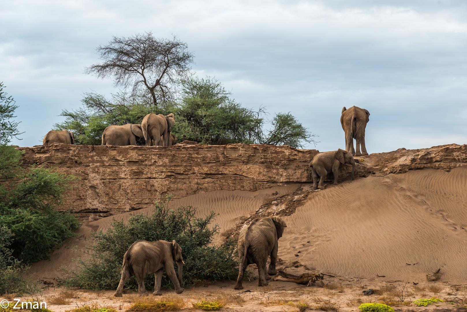 The Desert Elephant 05