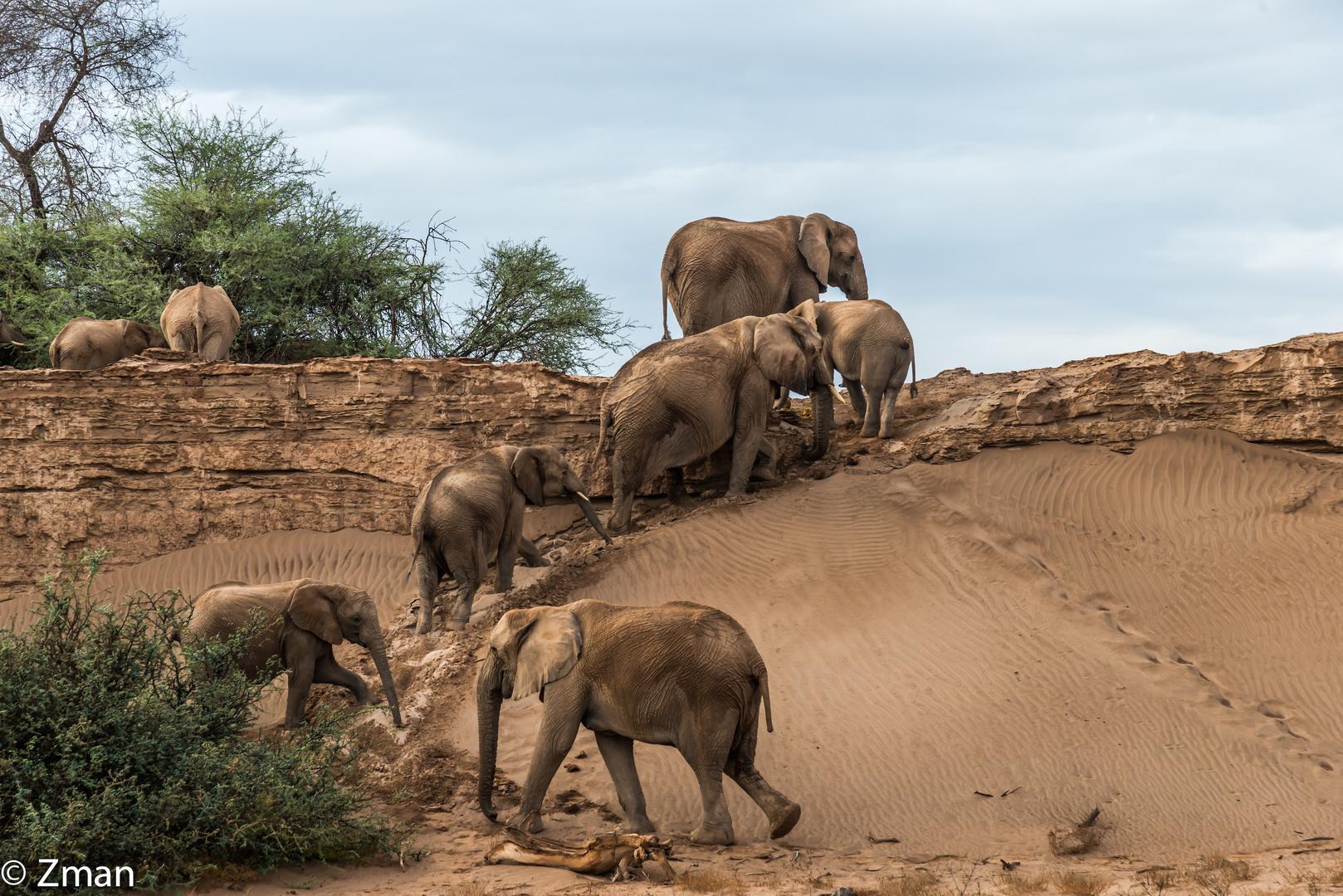 The Desert Elephant 06