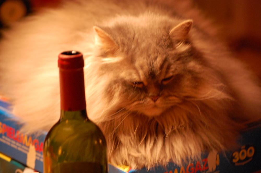 the drunken cat