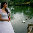 The ducks and the bride